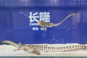 豹纹鲨家族再添新丁,长隆持续践行生态保护使命